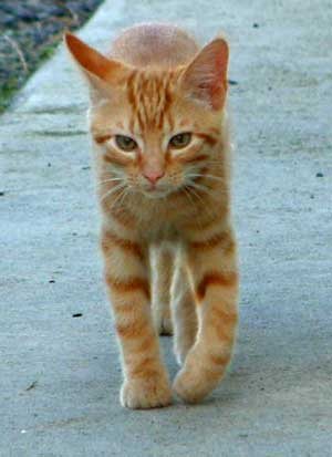 cats2002_0824_172944aa.jpg