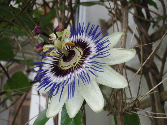 cbr_flowers_184.JPG