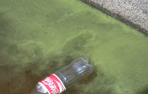 cola-and-algae.jpg
