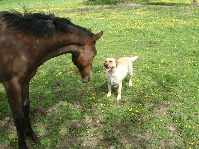 foal_ab3.jpg