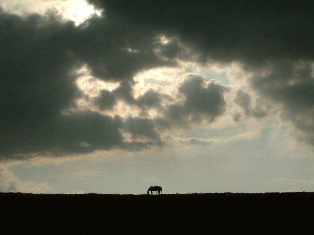 horsealone.jpg