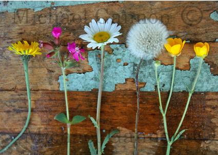new_wild_flowers_on_barrel__2_.jpg