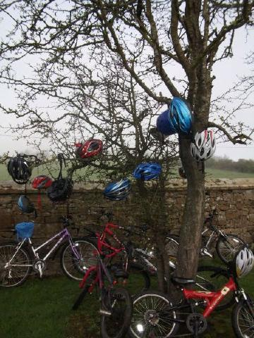 Creevagh_Helmet_Tree_0527.JPG