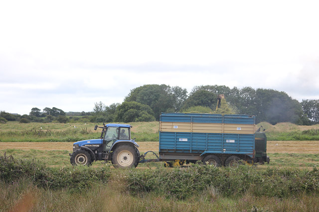 Cutting_Silage__1571.jpg