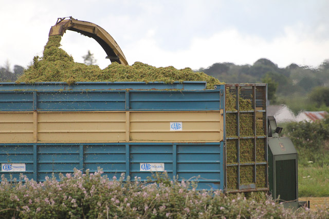 Cutting_Silage__1574.jpg