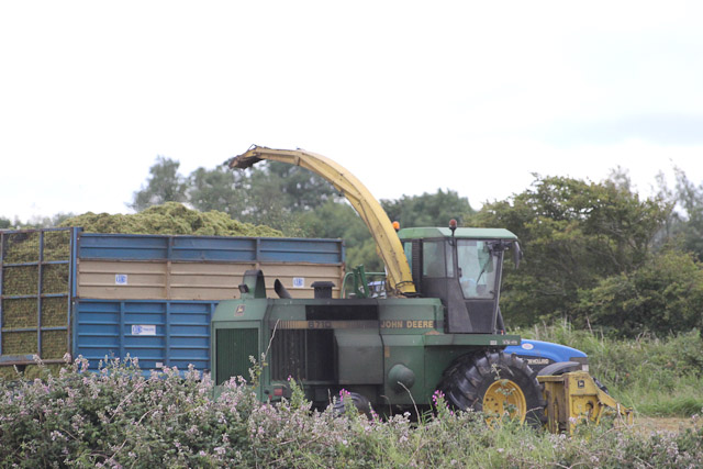 Cutting_Silage__1576.jpg