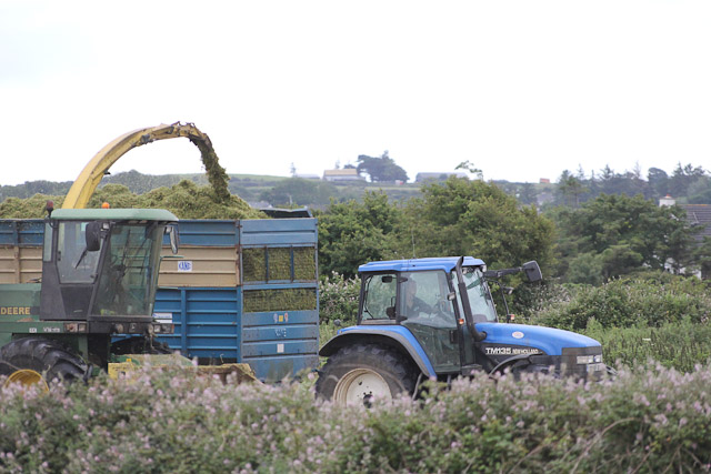 Cutting_Silage__1577.jpg