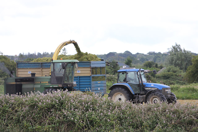 Cutting_Silage__1579.jpg