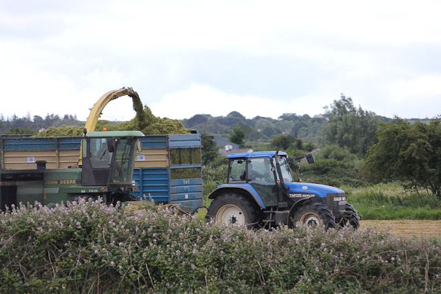 Cutting_Silage__1580.jpg