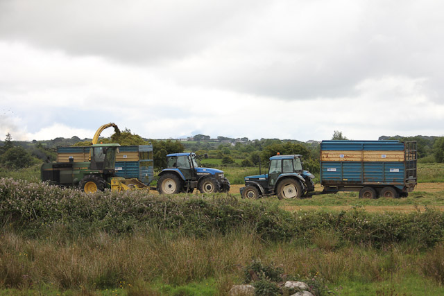 Cutting_Silage__1581.jpg