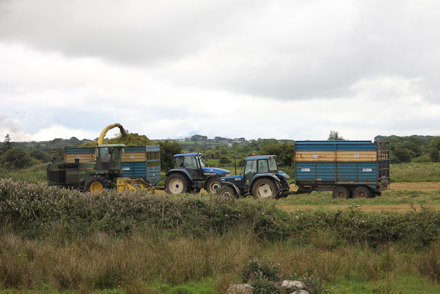 Cutting_Silage__1582.jpg