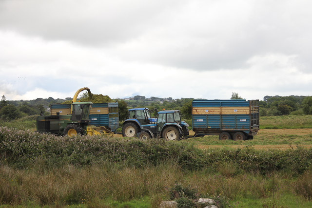 Cutting_Silage__1583.jpg