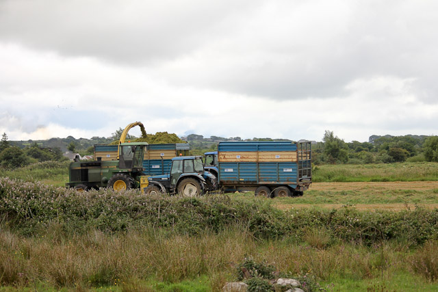 Cutting_Silage__1584.jpg