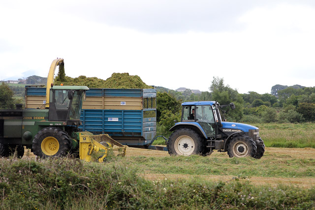 Cutting_Silage__1585.jpg