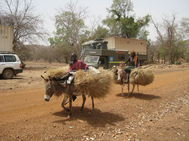 Donkeys-with-hay.jpg