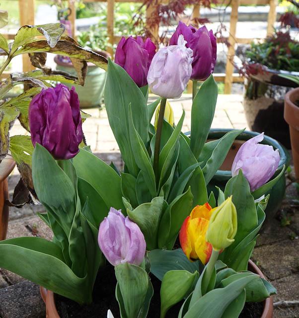 Easter-Flowers-DSC01219.jpg