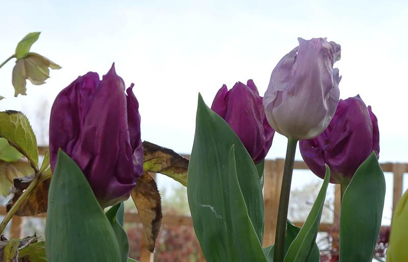 Easter-Flowers-DSC01220.jpg