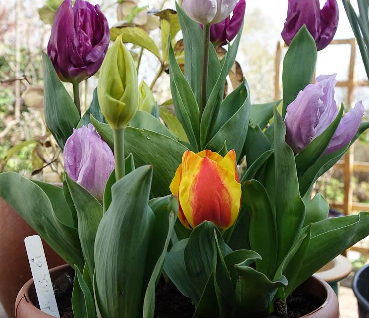 Easter-Flowers-DSC01221.jpg