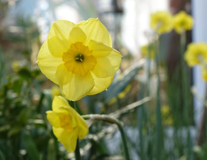 Easter-Flowers-DSC01222.jpg