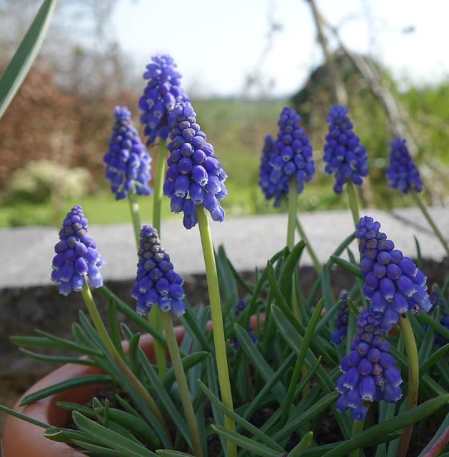 Easter-Flowers-DSC01224.jpg