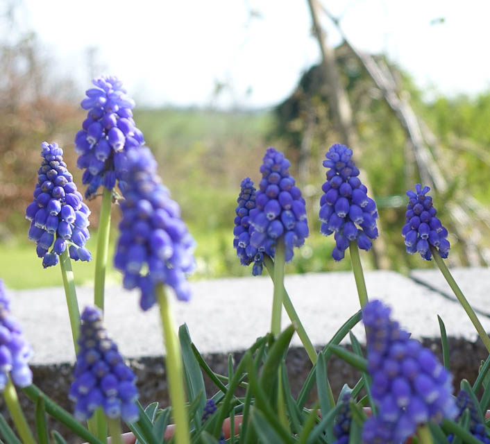 Easter-Flowers-DSC01225.jpg