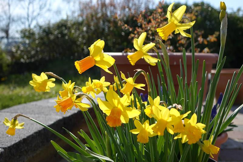 Easter-Flowers-DSC01227.jpg