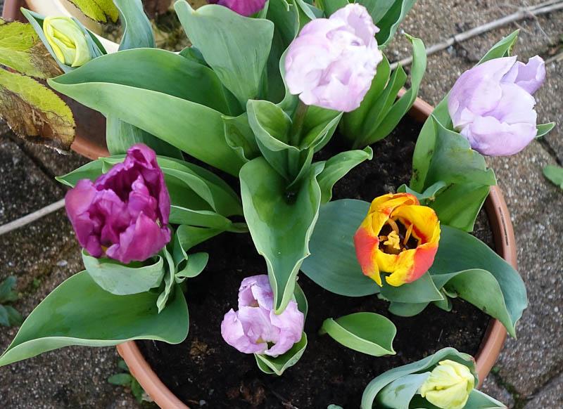 Easter-Flowers-DSC01230.jpg