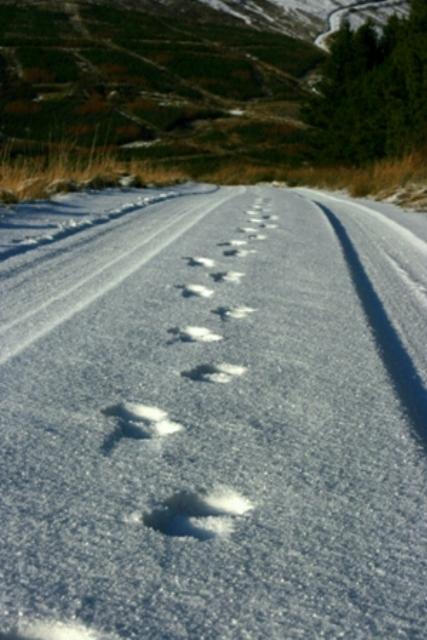 - Footprints_2