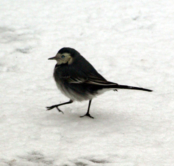 ROC_Winter_Birds_1.jpg