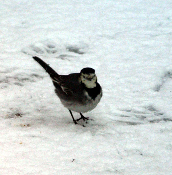 ROC_Winter_Birds_5.jpg