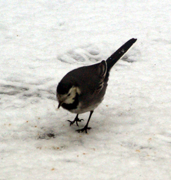 ROC_Winter_Birds_6.jpg