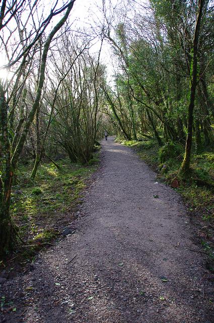 Raheens_Woodland_Walk1_1.jpg
