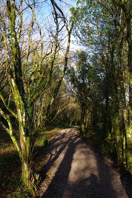 Raheens_Woodland_Walk_1.jpg