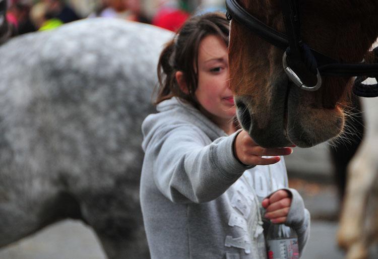 Westport_Horse_Fair_2009_17.jpg