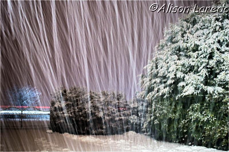 Winter_by_www.alisonlaredo.com_1.jpg