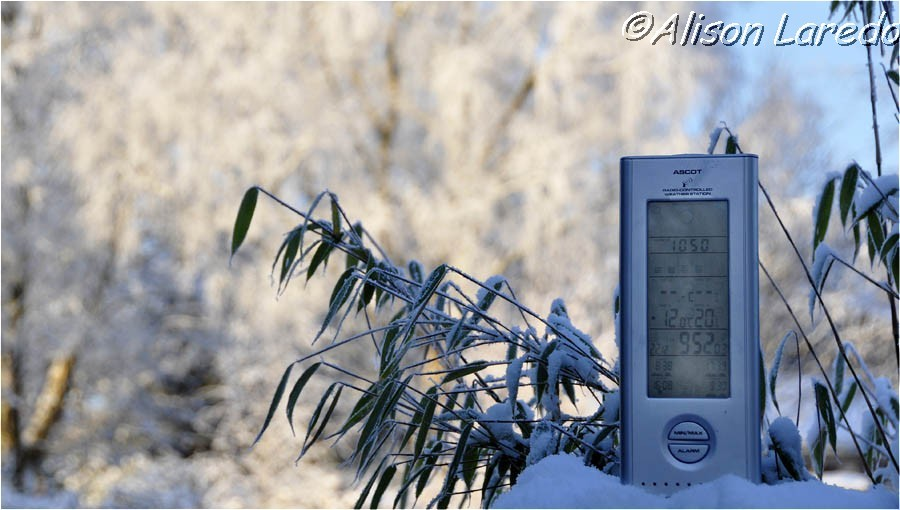 Winter_by_www.alisonlaredo.com_15.jpg