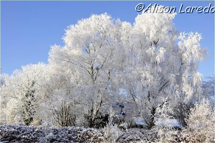 Winter_by_www.alisonlaredo.com_17.jpg