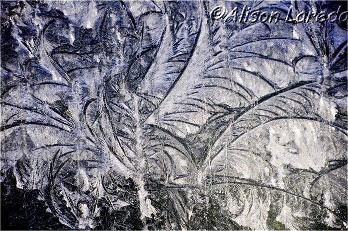 Winter_by_www.alisonlaredo.com_9.jpg