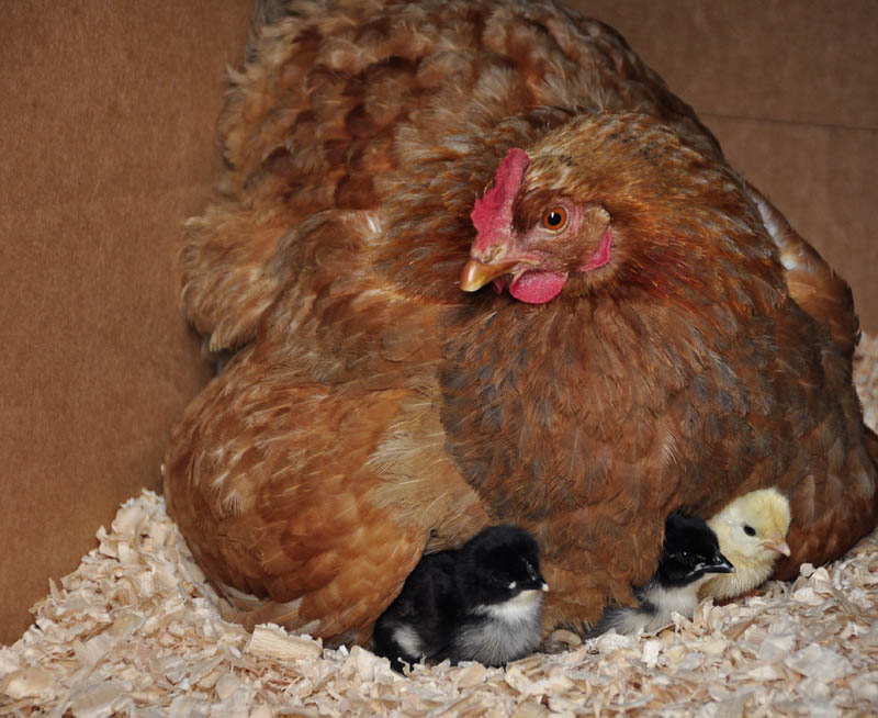 chicks_by_Alison_Laredo_13.jpg