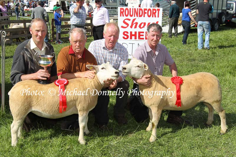 e87d9845__commercial_champ_sheep_roundfort_tn.jpg
