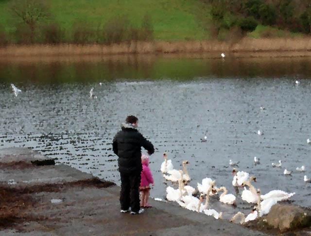 feeding_the_swans_1.jpg
