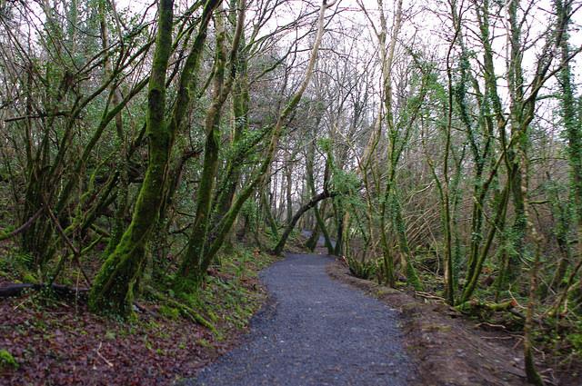 Turlough Woods
