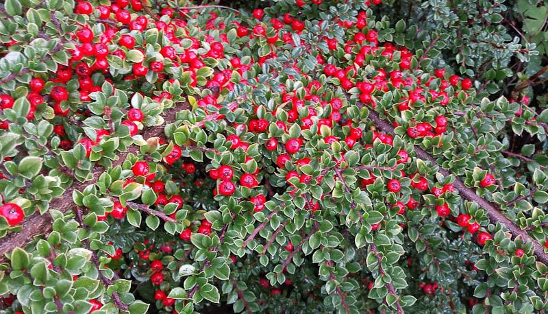 GardenFlowers20141006-4.jpg