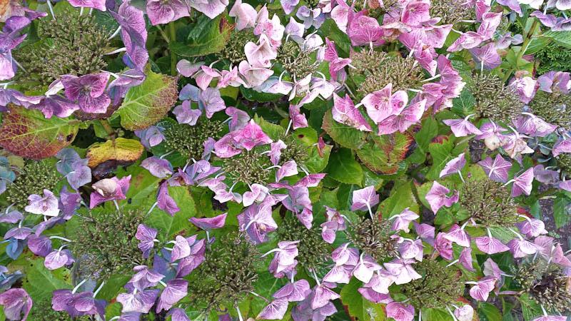 GardenFlowers20141006-7.jpg