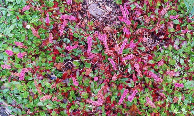 GardenFlowers20141006-8.jpg