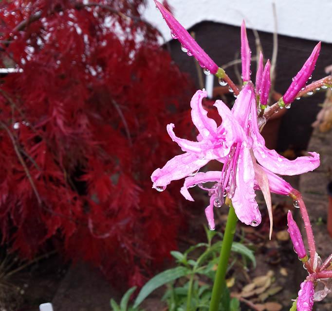 GardenFlowers20141006.jpg