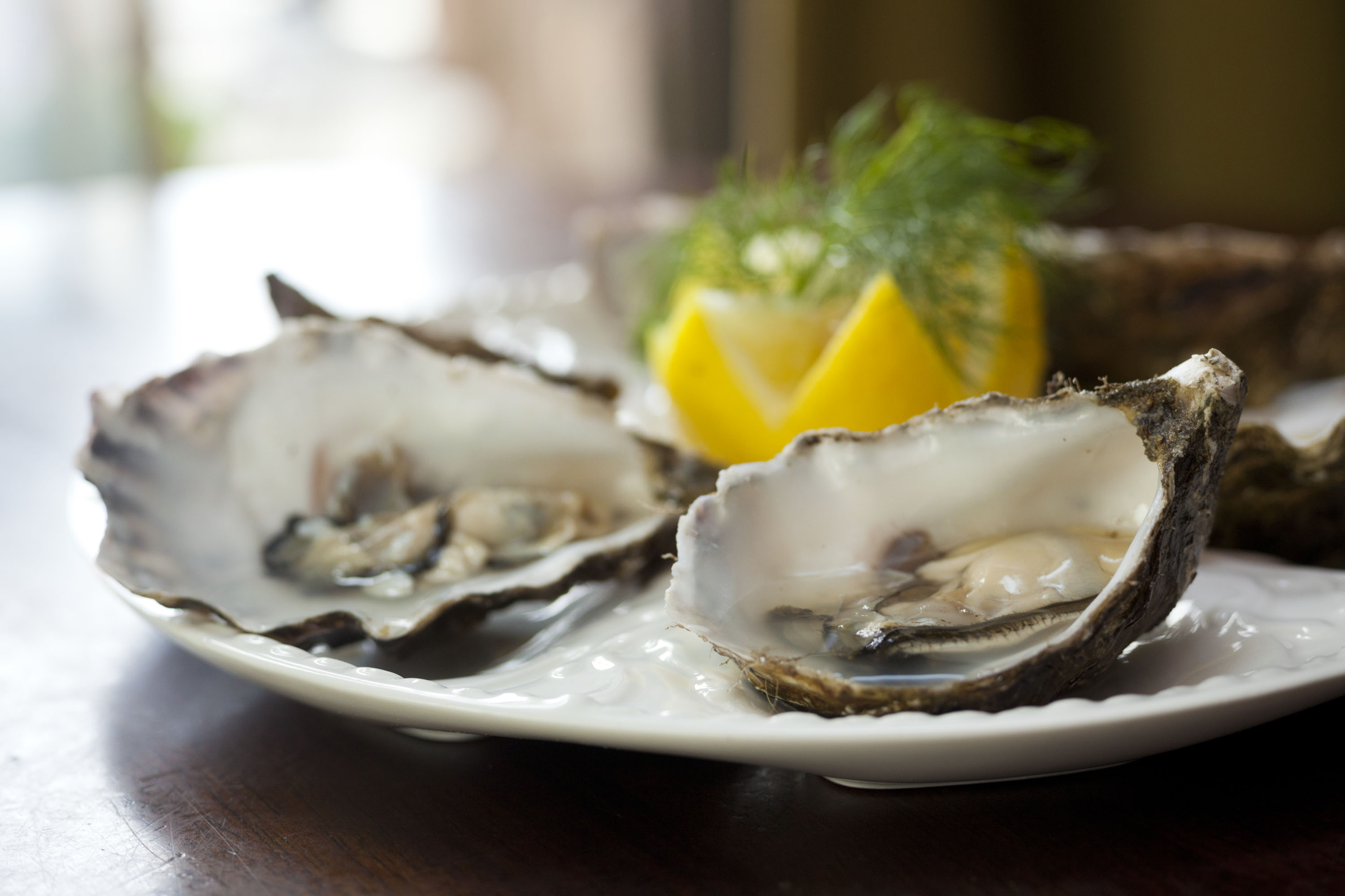 Oysters_at_The_Tavern_6976.jpg