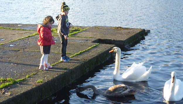 Swans_on_Lough_Lannagh.JPG