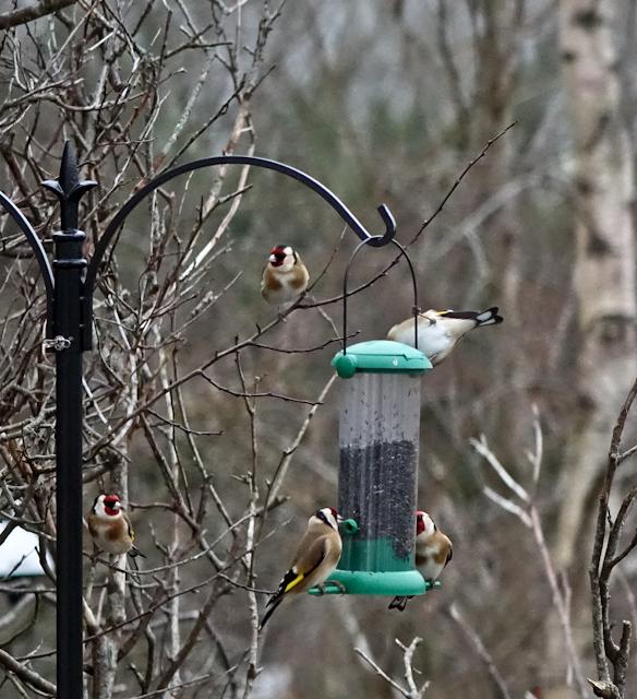 birdfeeder-DSC03854.jpg