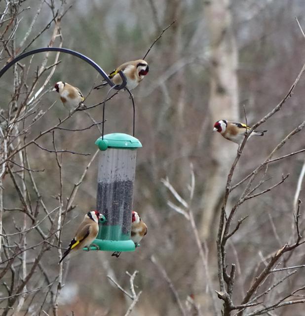 birdfeeder-DSC03856.jpg